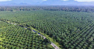 Industri Kelapa Sawit Untung Besar, Harga Minyak Sawit Mentah Melonjak Tinggi